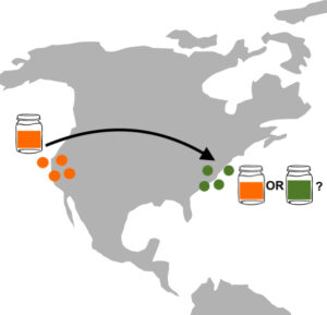 a map of the US showing orange dots on the West Coast and green dots on the East Coast; in the West is a Mason jar with an orange starter, and in the East are jars with orange or green, and a question mark